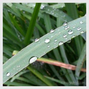 summer rain macro_opt
