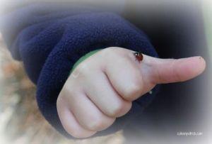 ladybug sign_opt