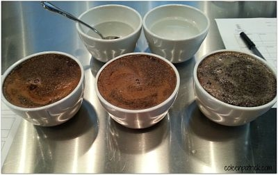 coffee cupping process_opt