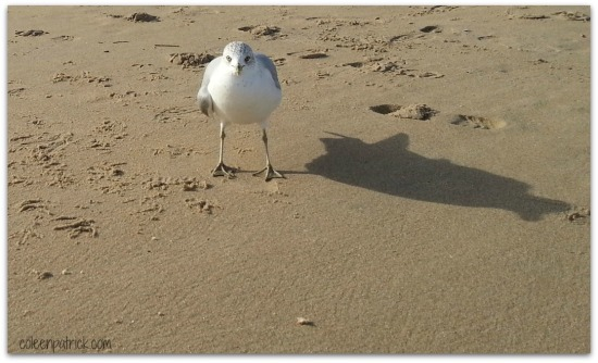 seagull standoff