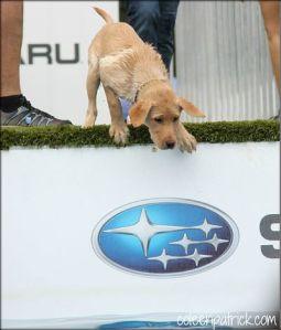 dog hesitates coleen patrick_opt