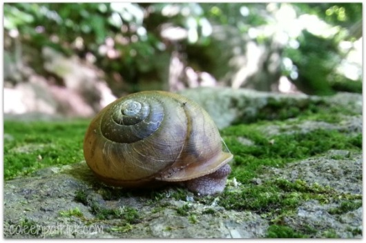 snail cllose up photo macro