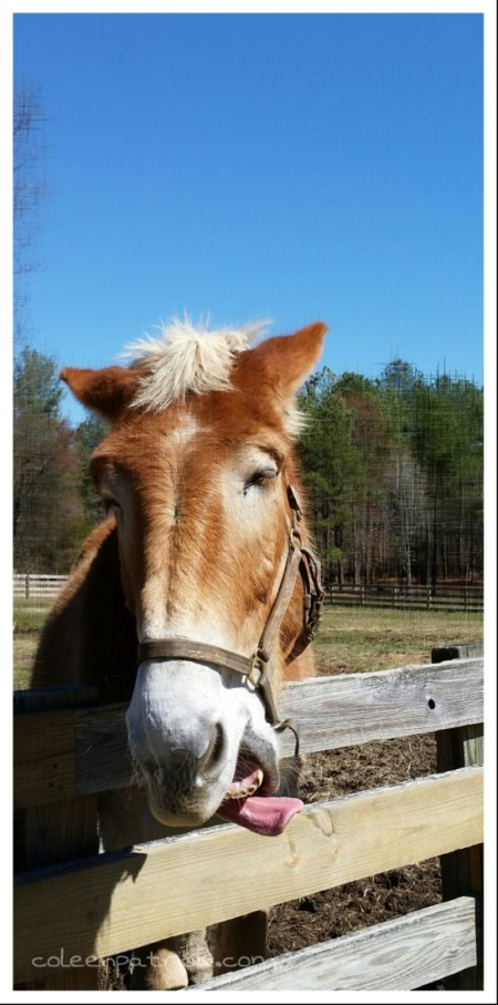 silly mule