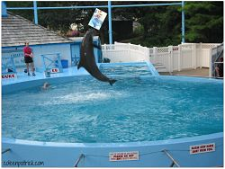 book marketing dolphin show_opt
