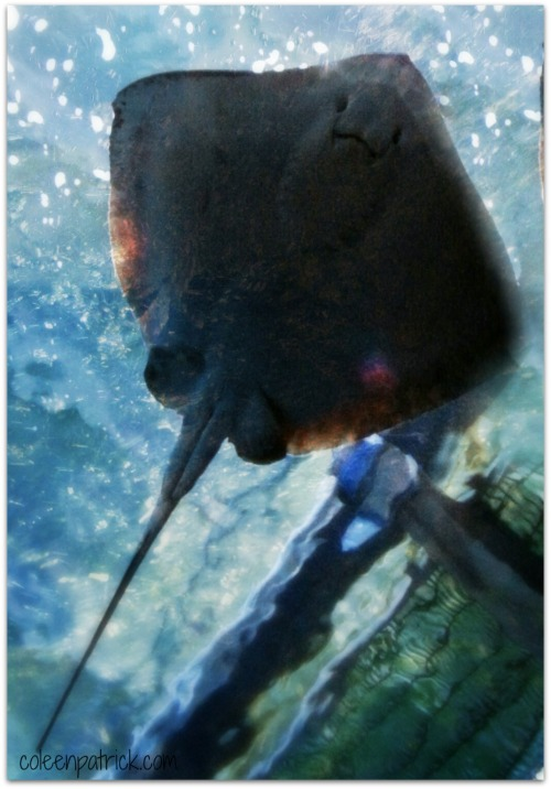 stingray closeup selfie