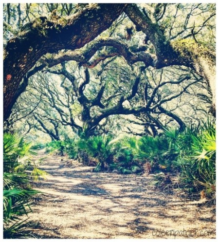 Cumberland island tree trail