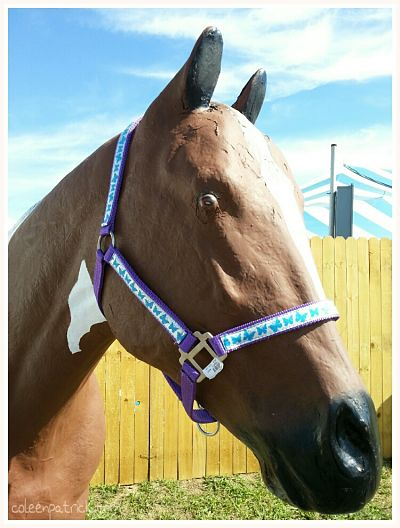 model horse state fair_opt
