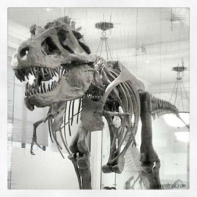 T Rex AMNH NYC_opt