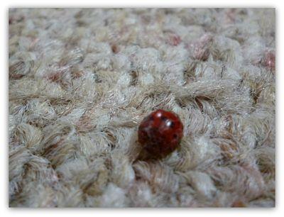 ladybug2_opt