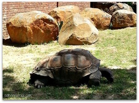 tortoise D.C. zoo