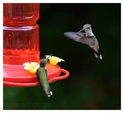 two hummingbirds bird feeder