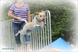 dog jumping soaring_opt