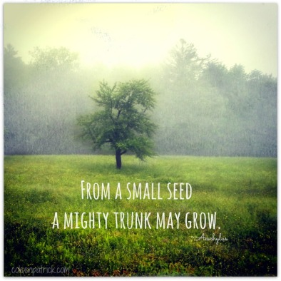 creative seed grows tree quote