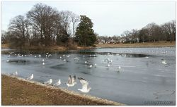 Byrd Park birds on ice_opt