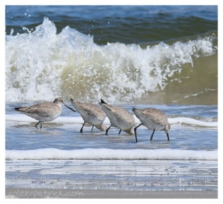 birds in a row Cumberland seashore