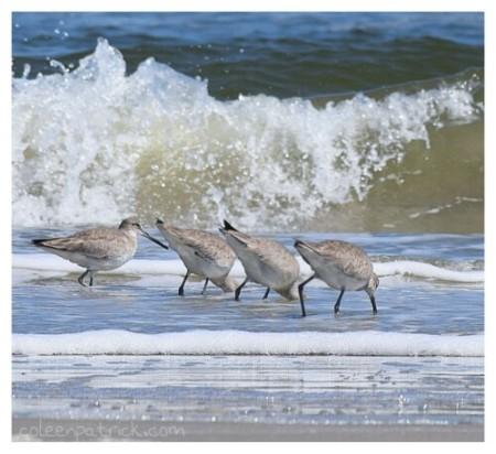 birds in a row Cumberland seashore