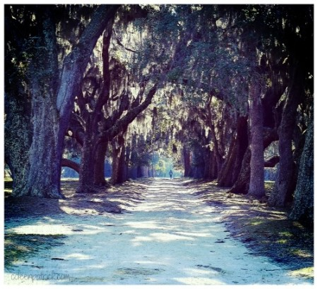 hiking cumberland island national park