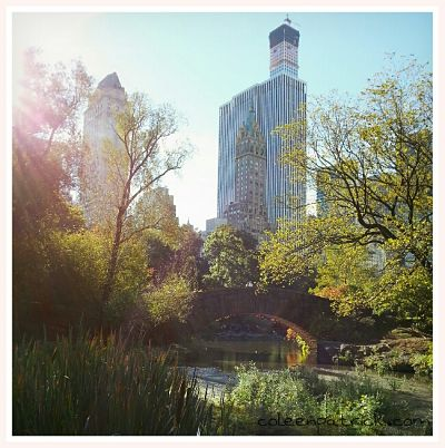 central park nyc_opt