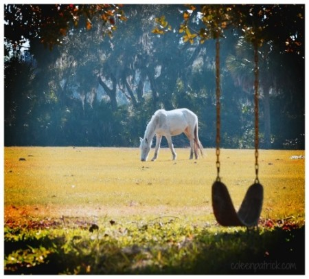 cumberland island horse tree swing